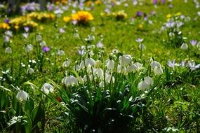 green sunny meadow with spring flowers