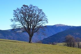 tree on the mountain field