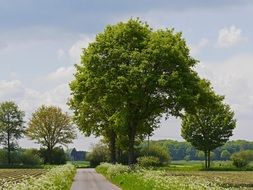 road amid scenic countryside in münsterland