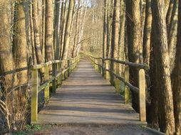 fascinating Wooden Bridge