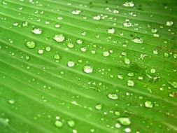 Water Drops on green Leaf structure