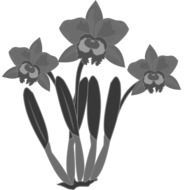 black and white clip art of orchids