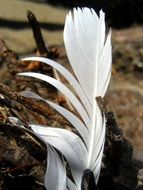 white feather as a natural decoration