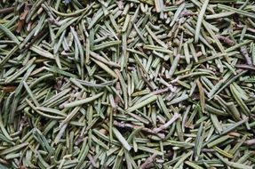 dried rosemary in the market