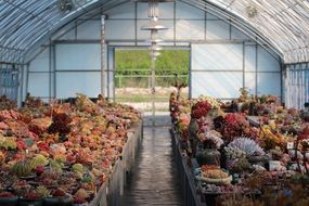 potted succulent plants in greenhouse