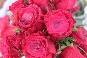 Bouquet Of Roses Roses Bouquet N3