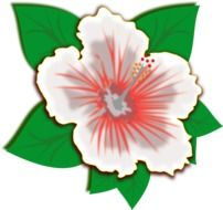 clip art of white spring flower