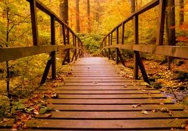 wooden bridge among the yellow forest