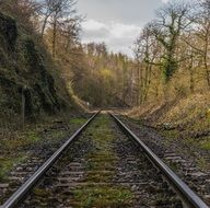 railway rails in the forest