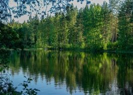 green forest by the lake in Finland