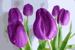watercolor drawing purple tulips