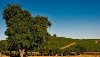 a picturesque landscape of vineyards in California