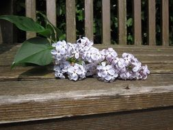 Decorative lilac flowers on a wooden bench
