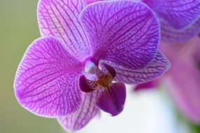 Blossoming beautiful orchid flowers