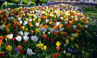 extraordinarily beautiful Tulips Park