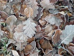 frozen autumn brown leaves close-up