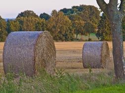Straw Field Harvest Nature view