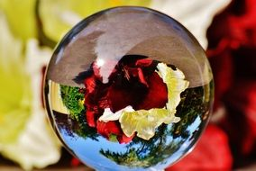 flowers through a glass ball