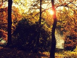 Autumn Sun rays in Forest Trees Nature Landscape