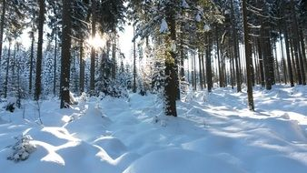 incomparable Forest Snow