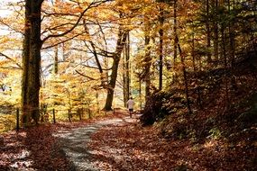 Beautiful landscape with the trail in the forest in autumn
