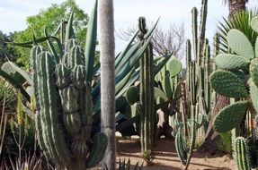 cacti in mexico