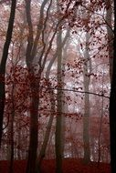 photo of red mystic autumn forest