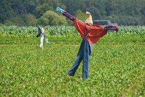 Scarecrows on Crop Field