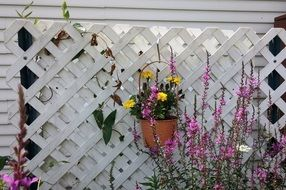 yellow flowers in a pot hang on the fence