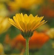 Macro Photo of Yellow Flower Plant