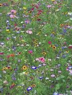 A lot of colorful flowers on a meadow
