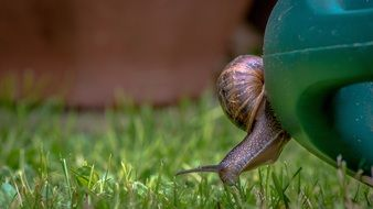 snail on a green watering can in the garden
