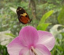 small Butterfly On moth orchid Flower