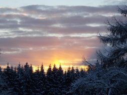 sunrise behind coniferous forest