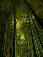 bamboo forest nearby of kyoto