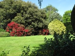 colorful summer Garden panorama