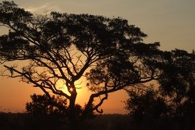 orange sunset over a plain in Africa