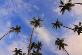 green palm trees under a blue sky with white clouds