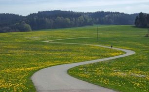 winding road on the flower meadow