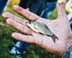 Fish on the hand