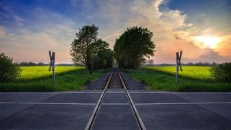 railway crossing against the background of a rape field