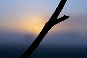 spider web on a bare branch at dusk