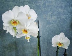 white orchids as a decoration