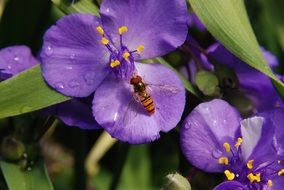 wasp sitting on a purple flower