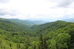 mountains in thickets of green forests