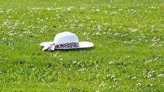 white hat on a flower green meadow