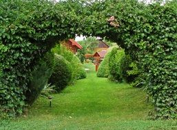 Green arch in ornamental garden