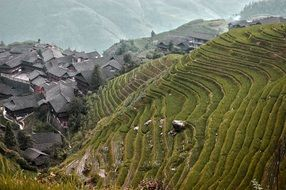 Rice Fields on mountain side, top view, China