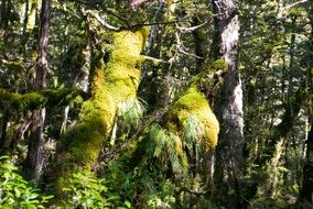green moss on trees in the forest