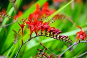Flower Red Green Nature